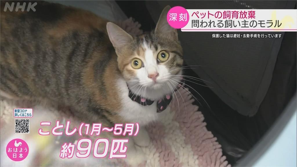 日本貓狗飼養量5年新高 棄養亂象更趨嚴重