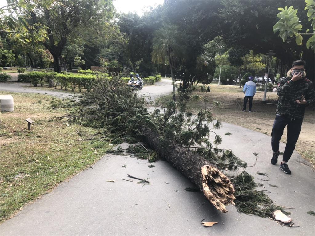 快新聞/上完公廁慘遭公園倒塌大樹擊中 台南63歲翁受傷送成大急救