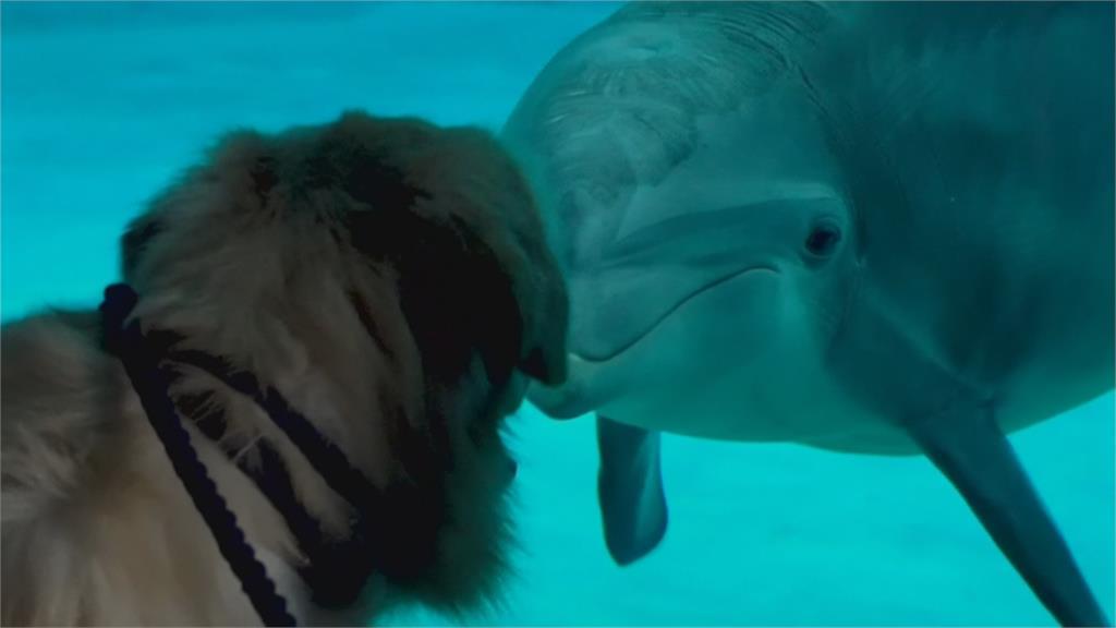 佛州海生館重啟 邀網紅狗狗跟海豚相見歡
