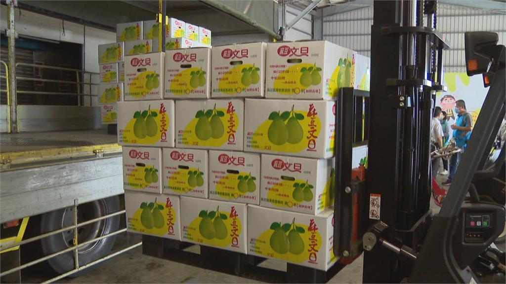 頭一遭!麻豆文旦外銷日本 九月下旬上架日本超市