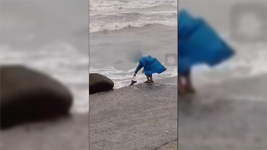 小黑狗遭丟入海中驚嚇掙扎 網掀除蚤、虐狗兩派論戰