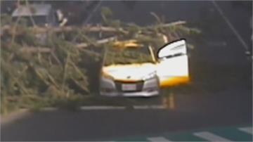 「樹大招風」!國小校樹斷裂砸兩車1人傷