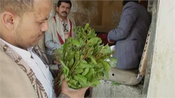 不能沒有它! 疫情風暴中葉門恰特草市場仍繁忙