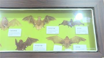 成武漢肺炎代罪羔羊 蝙蝠棲息地遭遊客破壞