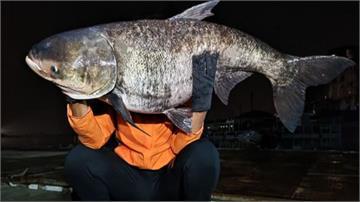 枯水期大魚現蹤 日月潭「大頭鰱」接連被捕獲
