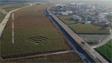 外星人傑作? 空拍嘉義玉米田出現「WiFi符號」