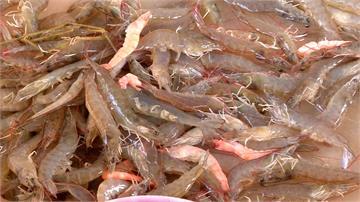中秋烤肉想吃海鮮得多掏錢!白蝦染病產量少價格飆