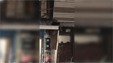 稱「反射動作」摔幼貓致死 麵店遭狂刷負評