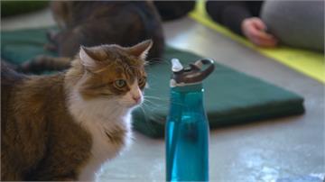 貓主子能收編更多奴才了!瑞士新疫苗抗「貓過敏」