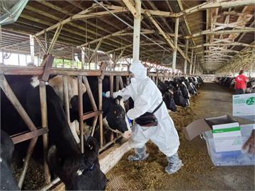 快新聞/全台最先完成 南市牛結節疹疫苗今全數施打完成