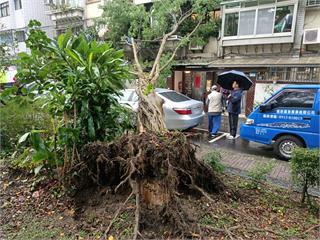 快新聞/北市信義區路樹突倒塌! 汽車、民宅窗戶遭波及 警方拉起封鎖線中