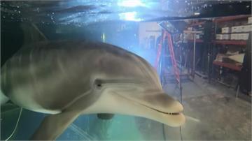 不必傷害海中生物!科技公司研發超擬真機器海豚