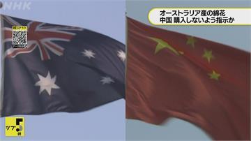 關係降冰點!繼葡萄酒風暴後中國再對大麥祭關稅 澳洲狀告WTO