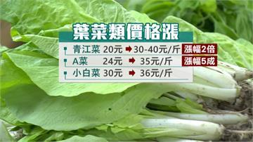 豪雨強灌中南部 青江菜價翻兩倍