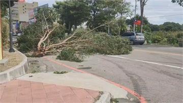 大樹倒塌「吃掉人車」3車5人傷影像曝光