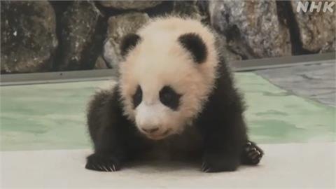 日本和歌山遊樂園新寵!  母貓熊寶寶亮相
