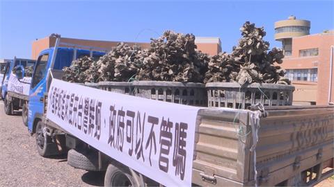 以假亂真?越南牡蠣冒充台灣貨 蚵農要求標產地