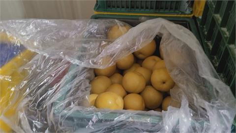 大湖「豐水梨」遇大雨產量少 「新興梨」躲過乾旱卻因疫情銷售砍半