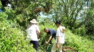 以農事體驗為主軸發展 臺灣休閒農業正逐步轉型│田下大小事|EP20