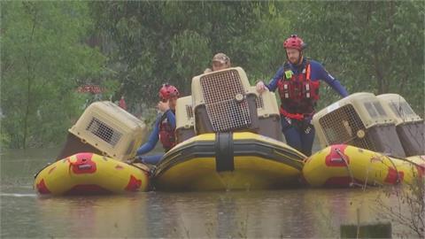 澳洲新南威爾斯雨彈狂襲 狗兒也受困 出動橡皮艇搶救