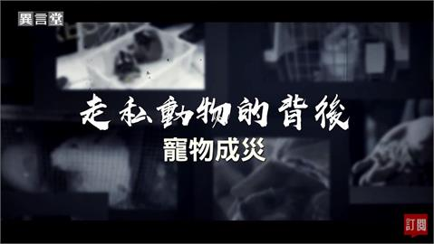 異言堂/走私動物的背後 直擊台灣寵物市場亂象