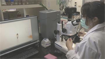 「一滴血」培養肺臟類組織 成功移植斑馬魚