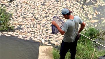 鳳山溪變黑水溝惹民怨 打撈100多噸魚屍