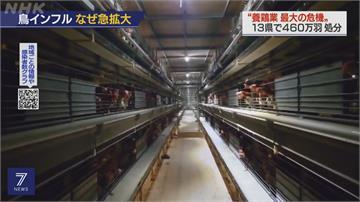 日韓爆禽流感 共撲殺千萬隻家禽