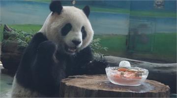 「貓熊吃年菜、大象有福袋」動物們也過春節