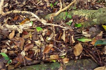 寶島台灣!「5大地形」成天然土壤博物館