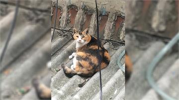 女子向母討5000元買貓飼料未果 拿刀弒母