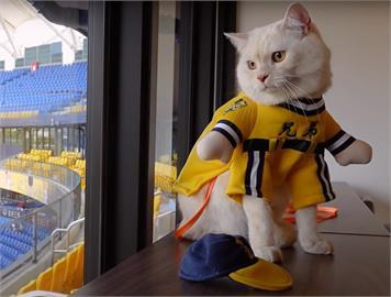 毛起來開球!「國民男友」王威晨摸頭殺 台灣第一位貓星人魅力爆棚