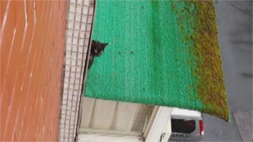 動保處人員一樣身手矯健! 小貓受困三樓屋簷「垂降救援」