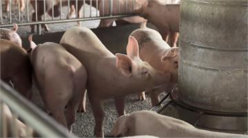 注入科技活水 臺灣養豬產業再次啟航世界|田下大小事|EP17