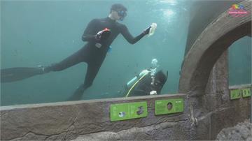 寒冷冬季動物園潛水員守崗位水中完成清潔工作「危機四伏」