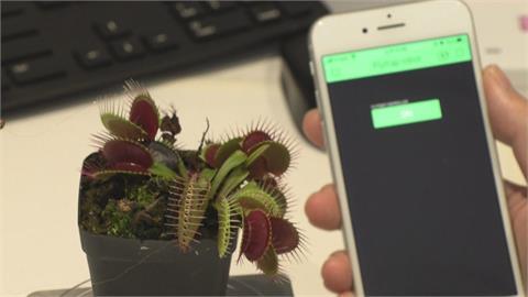 能結合機器手臂...撿拾細小物品!   這款「植物機器人」可用APP控制開合