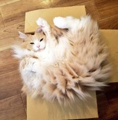 《冬天貓咪的靜電問題》一摸就被電到,你家也有電屬性的「貓可夢」嗎?