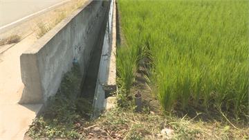 明德水庫蓄水率20年新低桃竹苗二期稻作停灌  農委會將發補償金