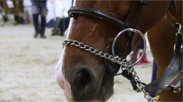 馬術比賽馬糞變能源 四天賽會供電自給自足