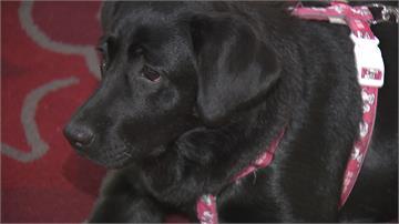 毛小孩看病有保障 寵物全聯會推寵物健保