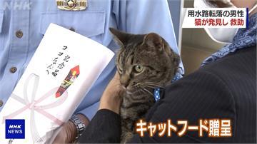 日本老翁受困水溝 虎斑貓示意救人獲乾乾獎賞