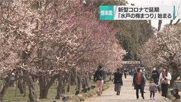 櫻花季開跑!日觀光協會推VR「在家賞花」