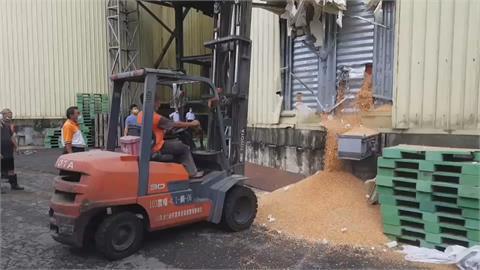 宛如流沙 愈掙扎陷愈深遭玉米粒活埋 農會員工搶救不治