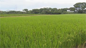農田停灌補償受理申請!農水署:下週公布其他作物補償辦法