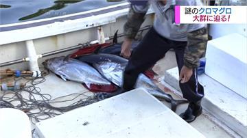 日本團隊出海探索  揭開黑鮪魚生態之謎