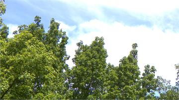 端午連假晴朗炎熱 周末午後雷陣雨擴大