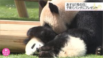 動物也過母親節!侏儒河馬、貓熊媽媽享大餐