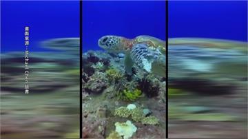小琉球海龜前肢斷裂纏著漁網 潛水客緊急通報