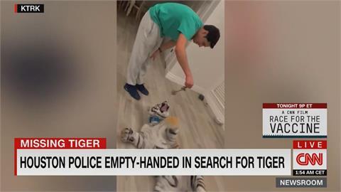 美國休士頓驚傳老虎失蹤 現已找到 警方指飼主違法飼養