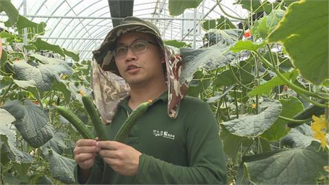 科技種小黃瓜更美味 31歲青農奪百萬獎金